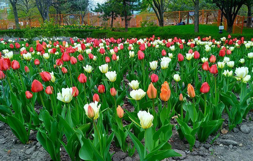 Цветы в Торонто